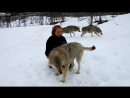 Волки помнят добро