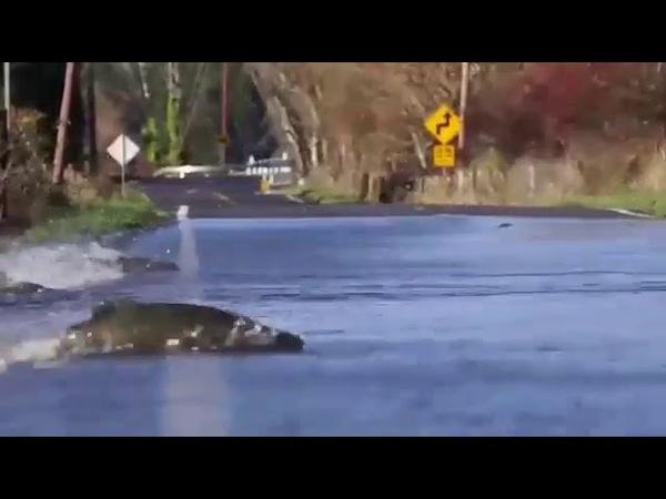 Езжай медленно и осторожно! Рыба переходит дорогу!