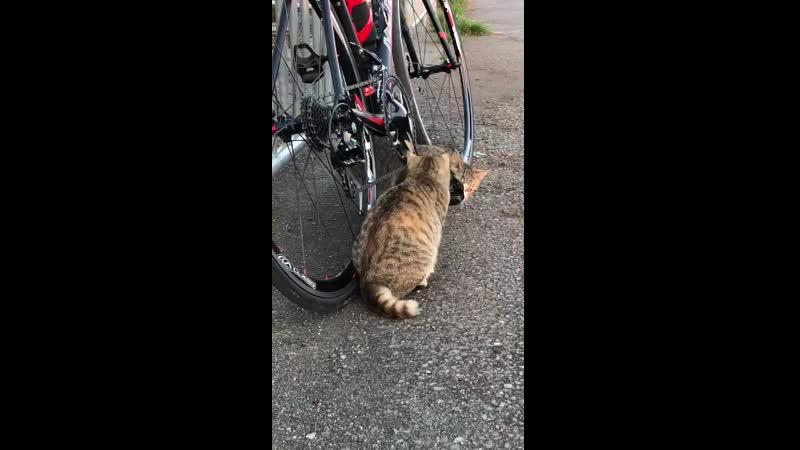 Две кошки провели осмотр велосипеда