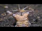 Кольчатый червь пидор