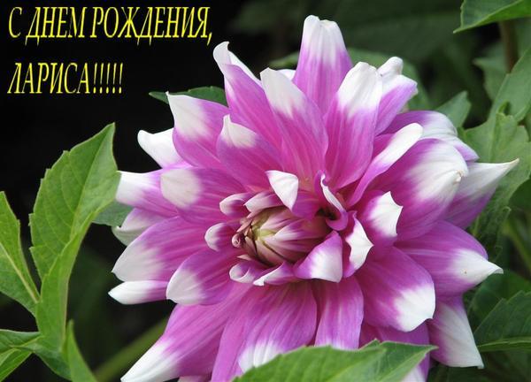 http://cs618827.vk.me/v618827450/1d6d0/ctdXCFW4SLU.jpg