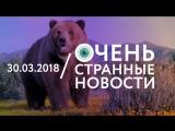 30.03 | ОСН #46. Домашний медведь