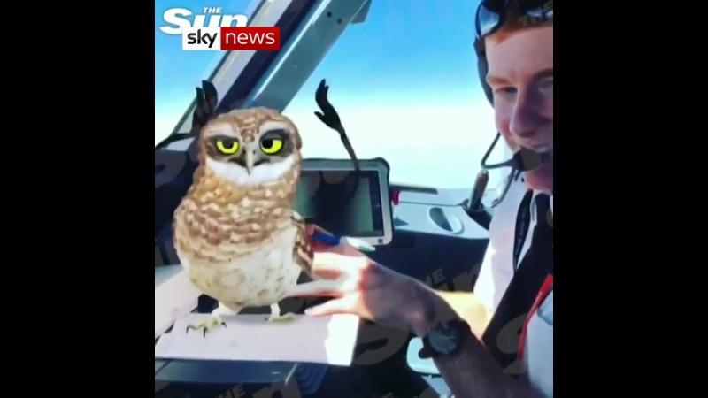 Пилоты EasyJet устроили трансляцию в SnapChat во время полёта