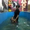Фитнес-бассейн для собак