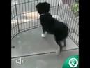 Conheça o cachorro que já está em clima de carnaval