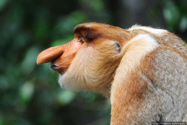 фото 2-х обезьян
