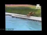 Собака-мама,спасает своего тонущего щенка! Чудесное спасенье.