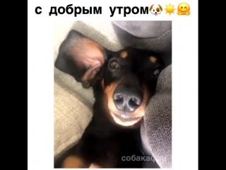 С добрым утром!)