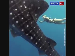 Подводный танец с китовой акулой