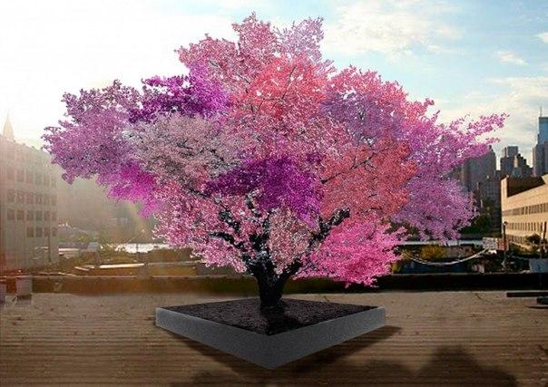 Дерево, на котором растет около 40 видов плодов. Десятки таких уже высажены в США. 7 удивительных фото недели: ↪