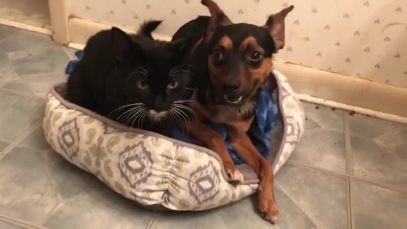 Dog and Cat Rescued Together and Wont Leave Each Others Side