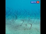 Этот подводный змеиный лес на самом деле - сад угрей.
