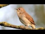Жанна Бичевская - Ах, как птицы поют
