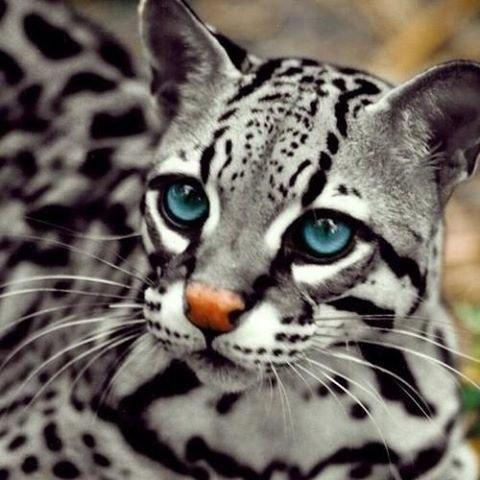 Удивительная красота!