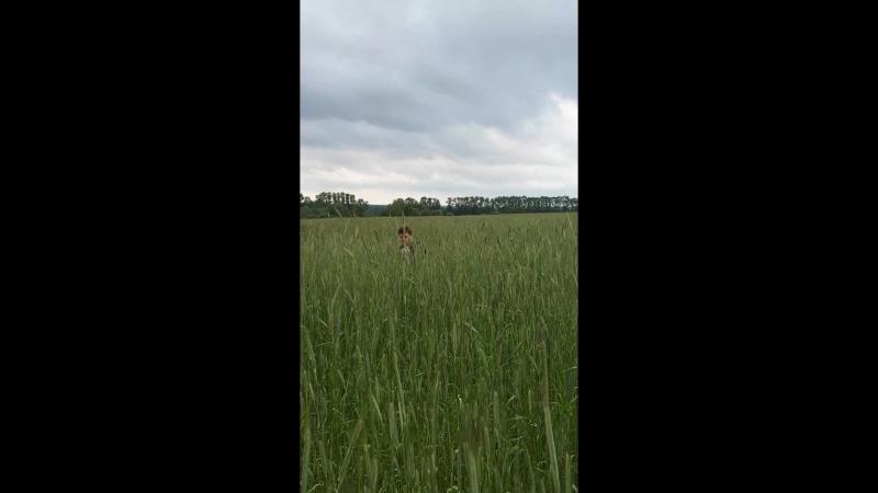 пшеничка....