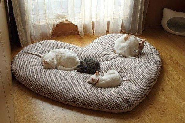 Лежак для собаки своими руками: 12 пошаговых вариантов на фото 4
