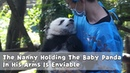 The Nanny Holding The Baby Panda In His Arms Is Enviable | iPanda