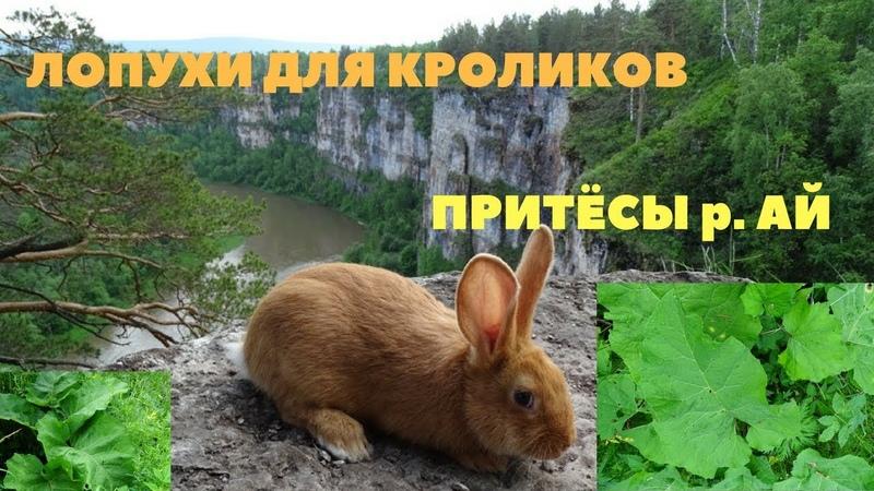 Лопух в рационе кролика кормить или не кормить Притёсы река Ай