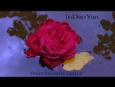 InDaoYan - Песнь Осенних Цветов