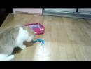 V-s.mobiСмешные кошки приколы про кошек с котами 2017 105 Топовая подборка с котами