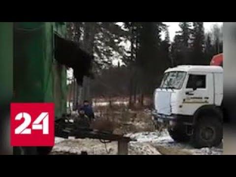 Застрявшего в бытовке медведя вытянули КамАЗом Россия 24