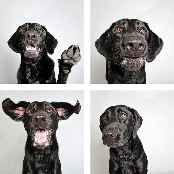 Портреты из фотобудки, помогающие обрести новых хозяев Волонтеры организации по спасению животных Гуманное общество штата Юта придумали интересный способ помочь собакам из приюта обрести хозяев.