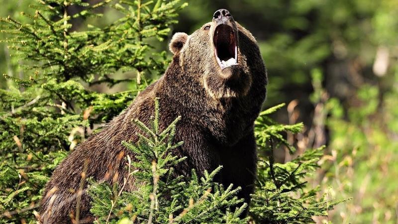 Нападение медведей на геологов / Михаил Богданов 17.04.18