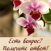 Орхидеи и другие цветы в вопросах и ответах