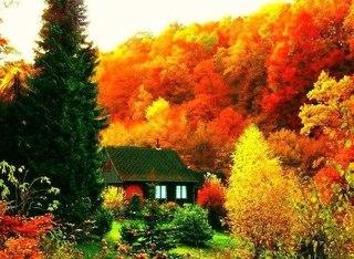 Отцвели цветы, падают листья, птицы молчат, лес пустеет и затихает.ОСЕНЬ. - Страница 6 O-gH-G0uZ-o