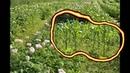 распопов поле без пахоты сорняки скошены тримером.avi