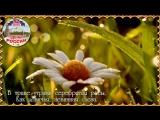 День России ✿ Красивое поздравление с Днем России ✿ Видео открытка