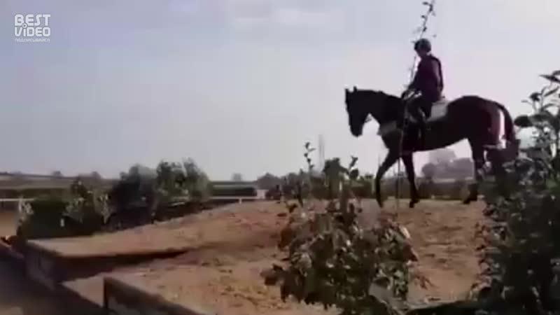 Коварная лошадь