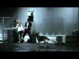 японская реклама корма для собак biqle