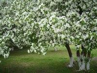 Сад - Огород.  Обрезка садовых деревьев и кустарников.