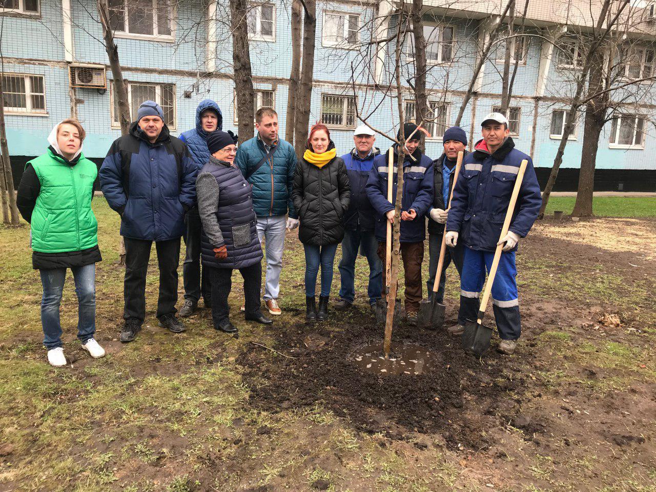 Молодые деревья и кустарники украсили пять дворов  Лианозова