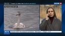 Новости на Россия 24 • Птичий грипп убил десятки лебедей на Кубани