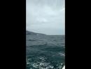 По морю до ласточкина гнезда
