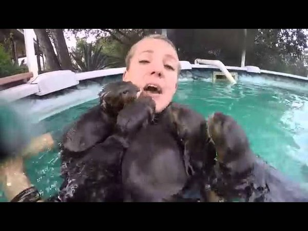 When baby otters 'attack'