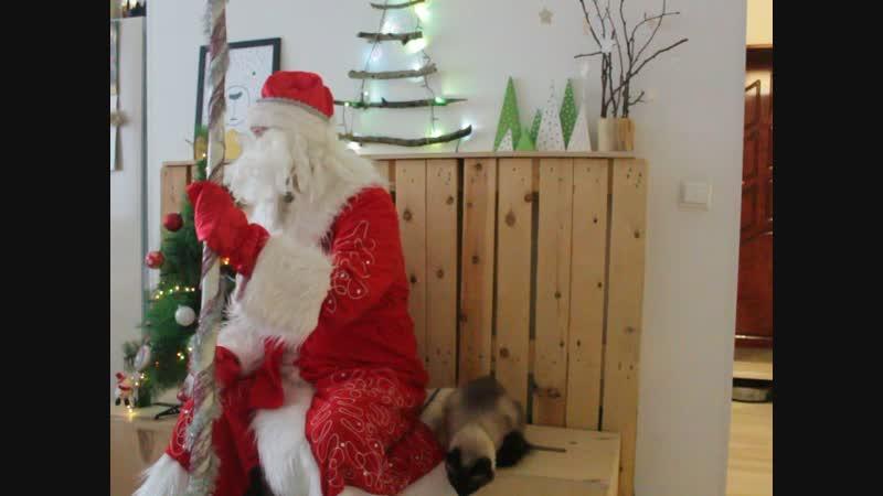 Гнусавая Васька и звездный час Деда Мороза