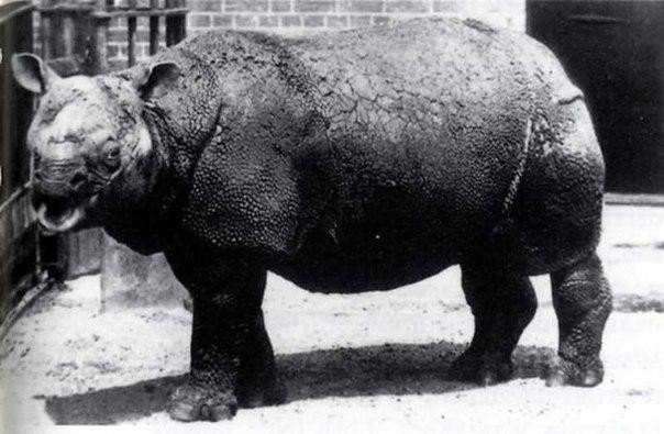 Часто люди, услышав словосочетание «вымершие животные», представляют себе динозавров, мамонтов и других древних обитателей планеты. Однако вымирание является постоянным процессом. За последние