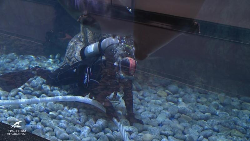 Подводный клининг