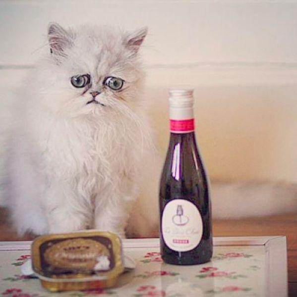 Этот кот вернулся с кладбища домашних животных Питомец Дженны Миллвард - кот по кличке Уилфред - выглядит так, будто явился прямиком с кладбища домашних животных. Хозяйка души не чает в стремном
