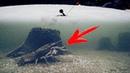 ШОК! РАК КЛЮНУЛ НА ЖЕРЛИЦЫ Зимняя рыбалка на раков