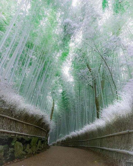 Бамбуковый лес в Арасияма, Киото, Япония