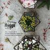 HYGGE| florariums - флорариумы в Новосибирске