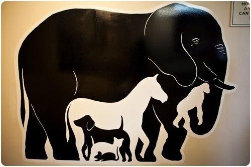 ЗАГАДКА: с которой справляются лишь 20% людей  Сколько животных вы видите на картинке?   четверых пятеро шесть