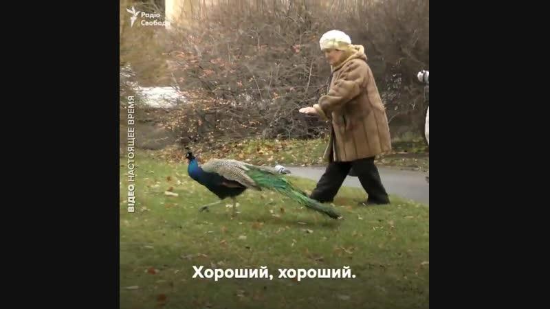 Безвіз для бабусі