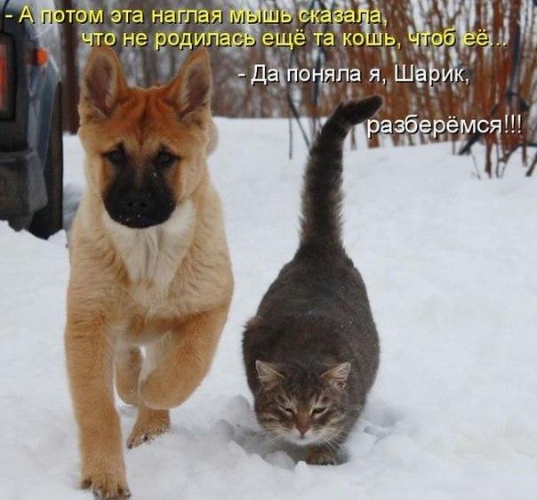 http://cs416421.userapi.com/v416421513/3f49/DsHWwyd1iiU.jpg