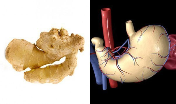 Еда полезна для той части тела, на которую похожа