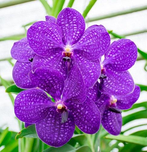 мифы об орхидеях к сожалению, именно это распространенное мнение нанесло невероятно много вреда. как только до ушей начинающего или опытного цветовода доходит эта информация, он начинает уделять